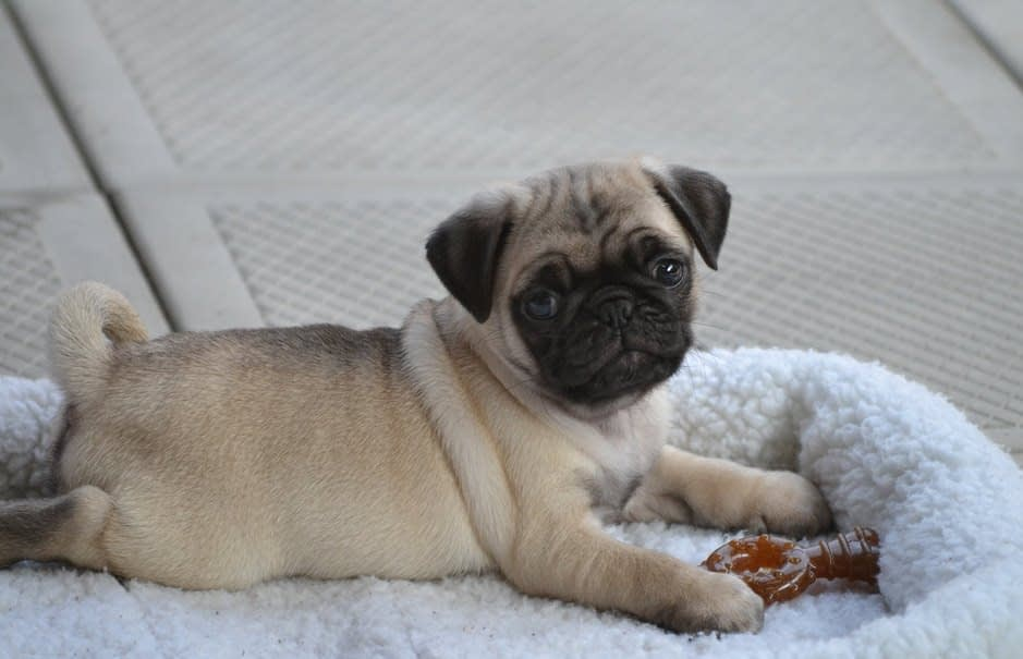 puppys first bed